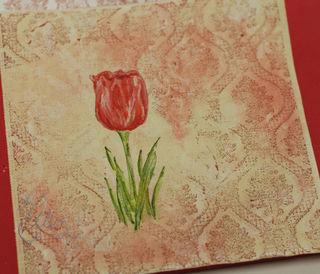 Tulip 11