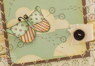 Star Butterfly Closeup