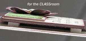 CLASSroom19DimensionalsWithWM