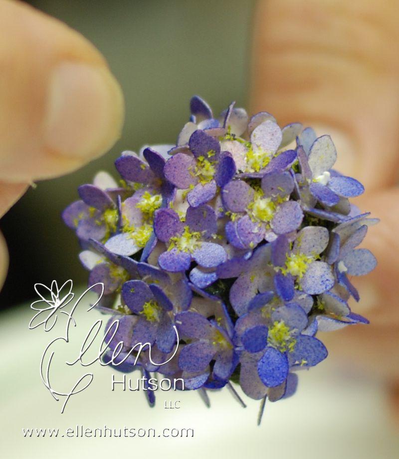 Hydrangea Bloom FS