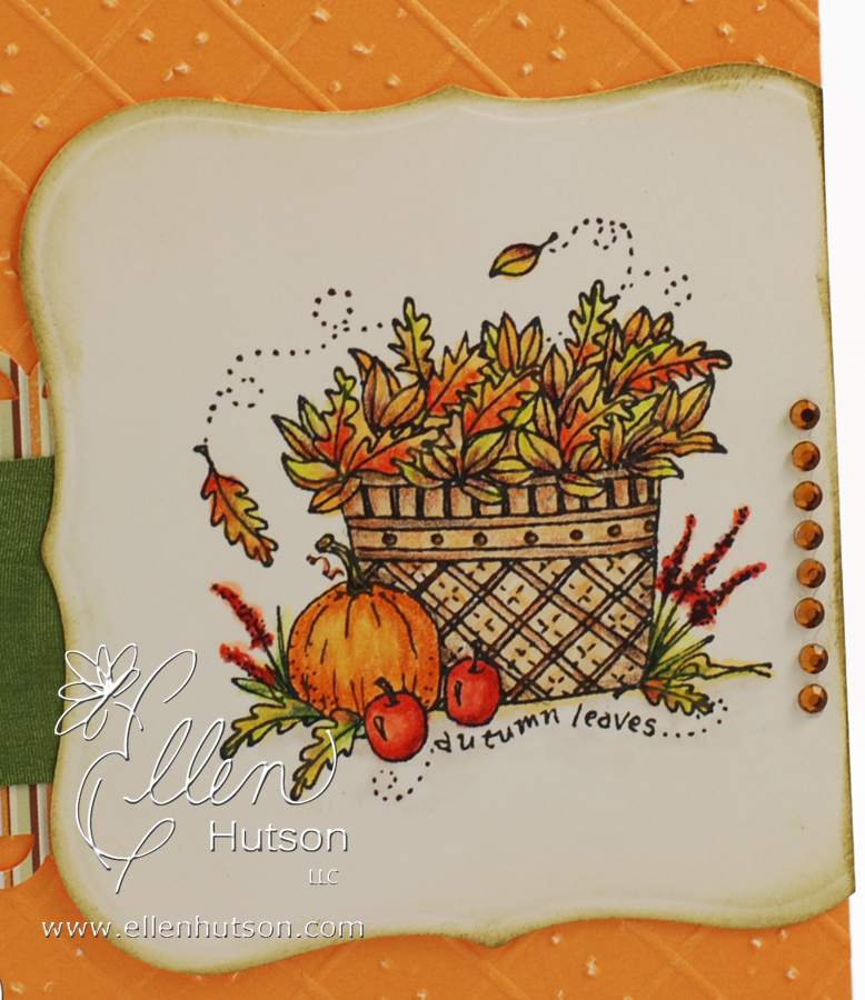 Fall Leaves Closeup