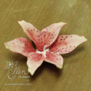Lily Glued