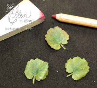 Leaf Colors 2
