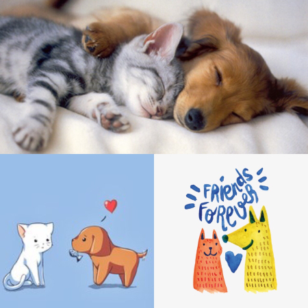 Puppy Love Products Kitties Too The Classroom
