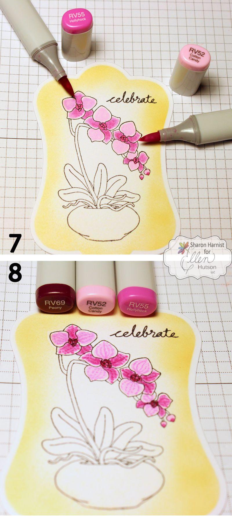 5-OrchidCelebrateCO7-8-SH