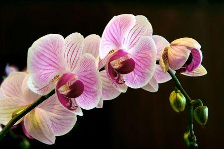 5-orchid-pic