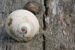 Snails_pace_2