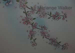 Mw_cherry_blossoms